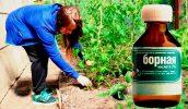 Удобрение растений борной кислотой