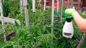 Подкормка растений раствором борной кислоты