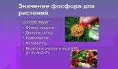 Польза подкормки фосфором растений