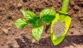 Правила применения фосфорных подкормок