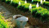 Удобрение для огорода