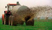 Как использовать свежий коровяк