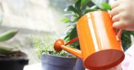 Удобрения для цветов