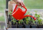 Аммиачная вода для обработки растений