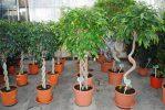 Как приготовить хелат железа для обработки растений?